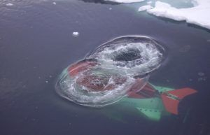 © Из личного архива Владимира Соколова, начальника Высокоширотной арктической экспедиции Арктического и Антарктического НИИ Росгидромета