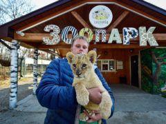 Ветеринар зоопарка Виктор Агафонов с львицей Астрой © Юрий Смитюк/ТАСС