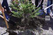 Итоги «Недели леса-2018» подвели в Татарстане