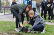 Школьники высадили семь именных деревьев на Аллее памяти в Кировске