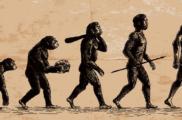 Открытие нейробиологов изменило историю эволюции человека